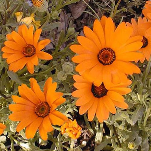 Цветы с диском своими руками
