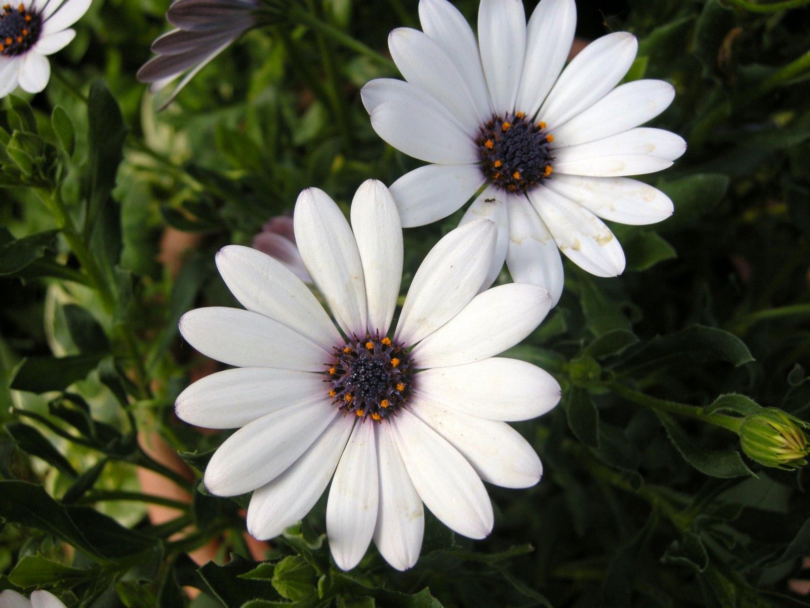 Клумбовые цветы и растения названия однолетних и