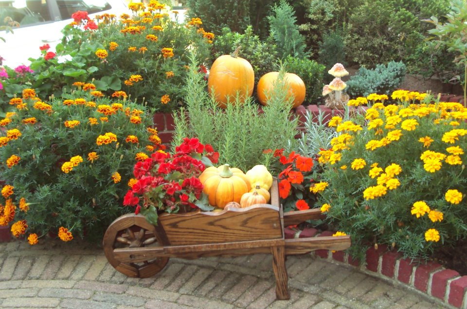 Уличные цветы которые сажают осенью 90